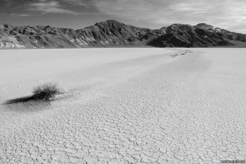 _79596645_isolatedvegetationonadrylakebed